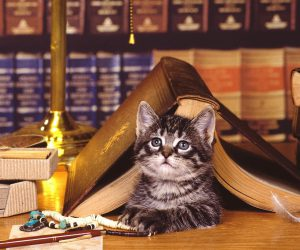cat_book_lying_face_library_89299_3840x2400